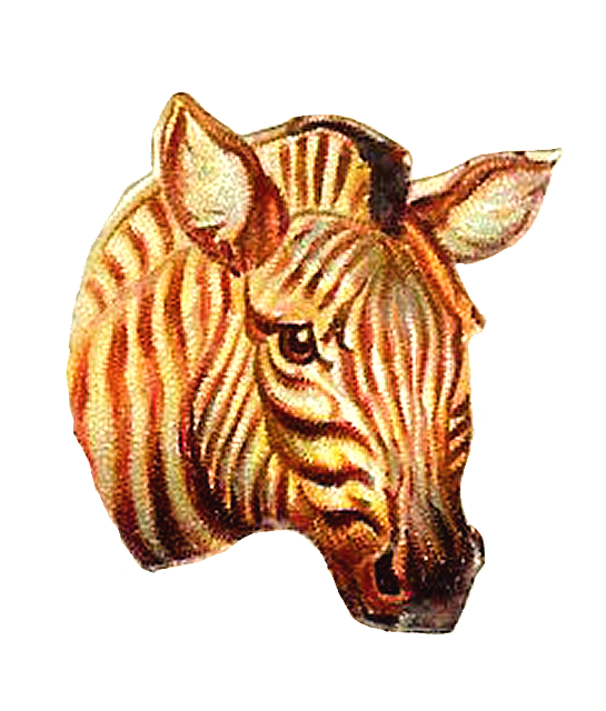 Digital Zebra Download Portrait Animal Graphic Clipart