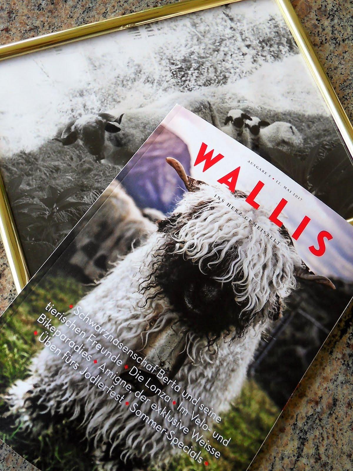 Mit einem Klick aufs Bild bist du im Wallis bei den Schwarznasenschafen.