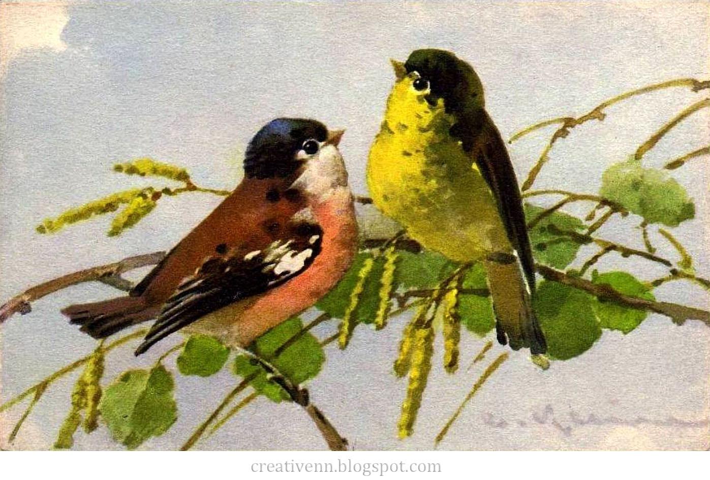 Klein птицы catherine klein птицы catherine klein птицы