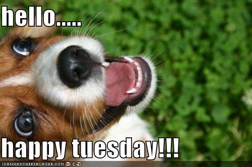 happy tuesday funny meme - photo #24