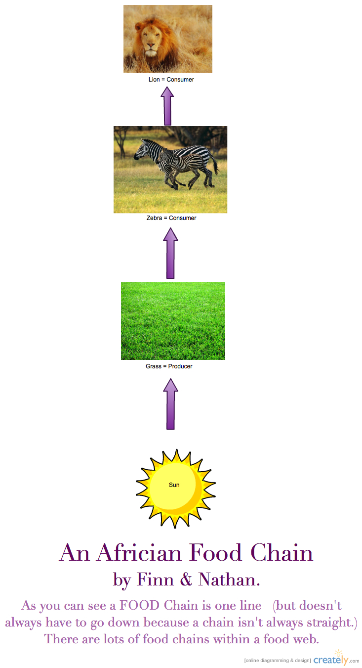 Photosynthesis Diagrams Worksheet – Photosynthesis Diagram Worksheet Answers