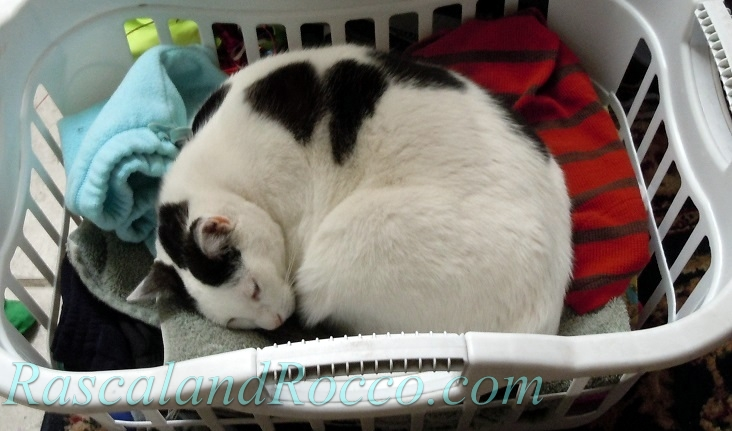 lurking laundry basket when laundry strikes back rascal and rocco