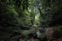 Gunung Leuser, Nanggroe Aceh Darussalam