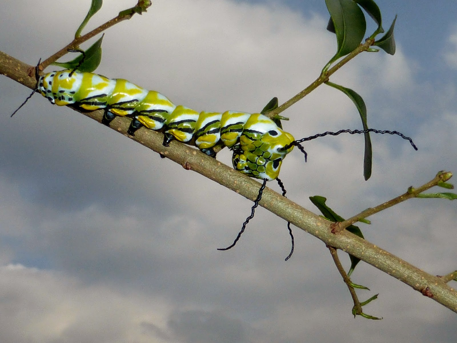 Brahmaea wallichii caterpillar