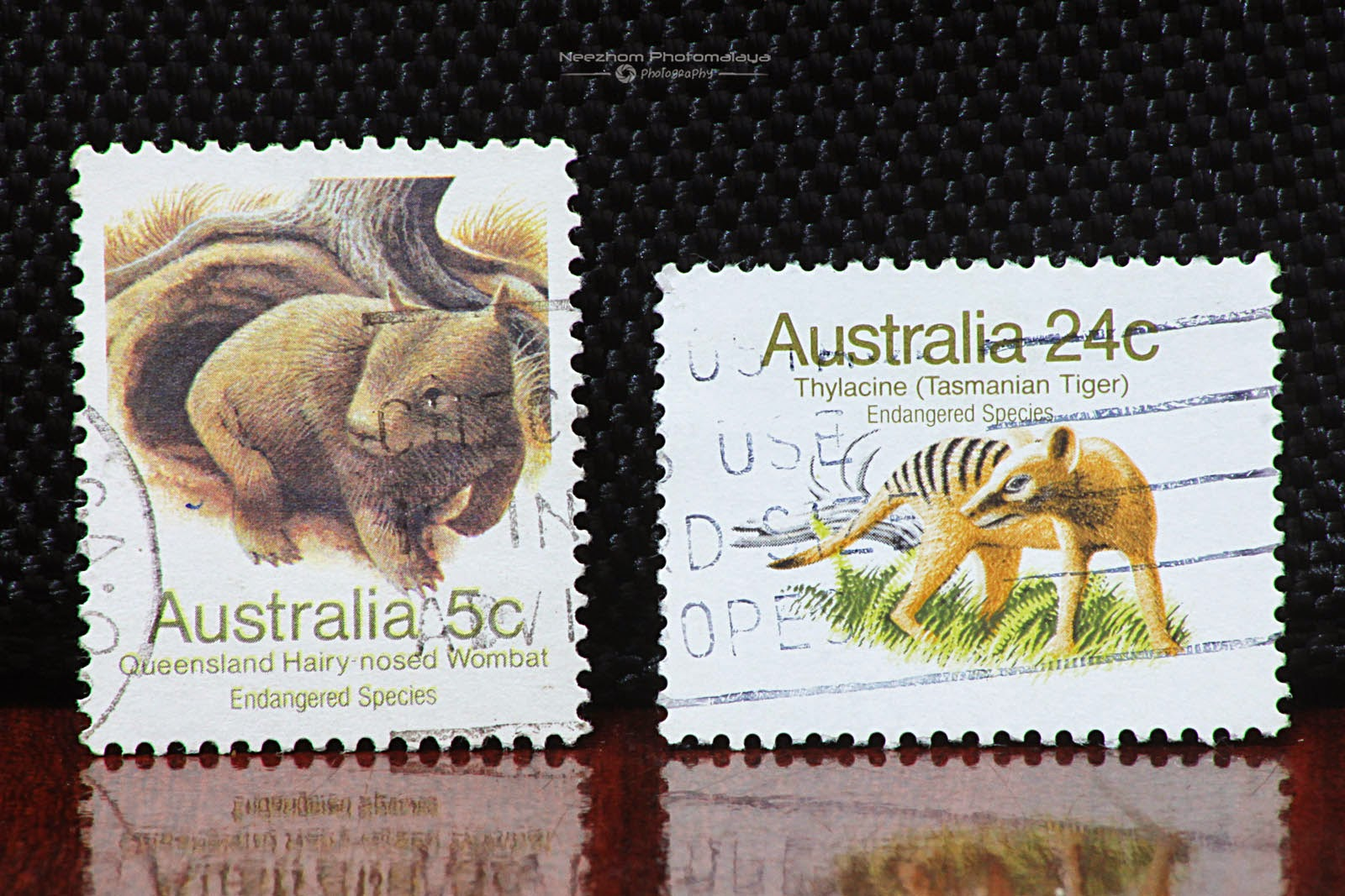 Australia 1981 Endangered Species - Queensland Hairy nosed Wombat 5 cents, Tasmanian Tiger 24 cents