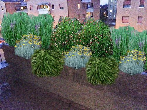 Progetti giardini privati gratis on line con piante for Piante da balcone sempreverdi