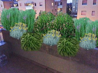 progetto balcone con piante sempreverdi