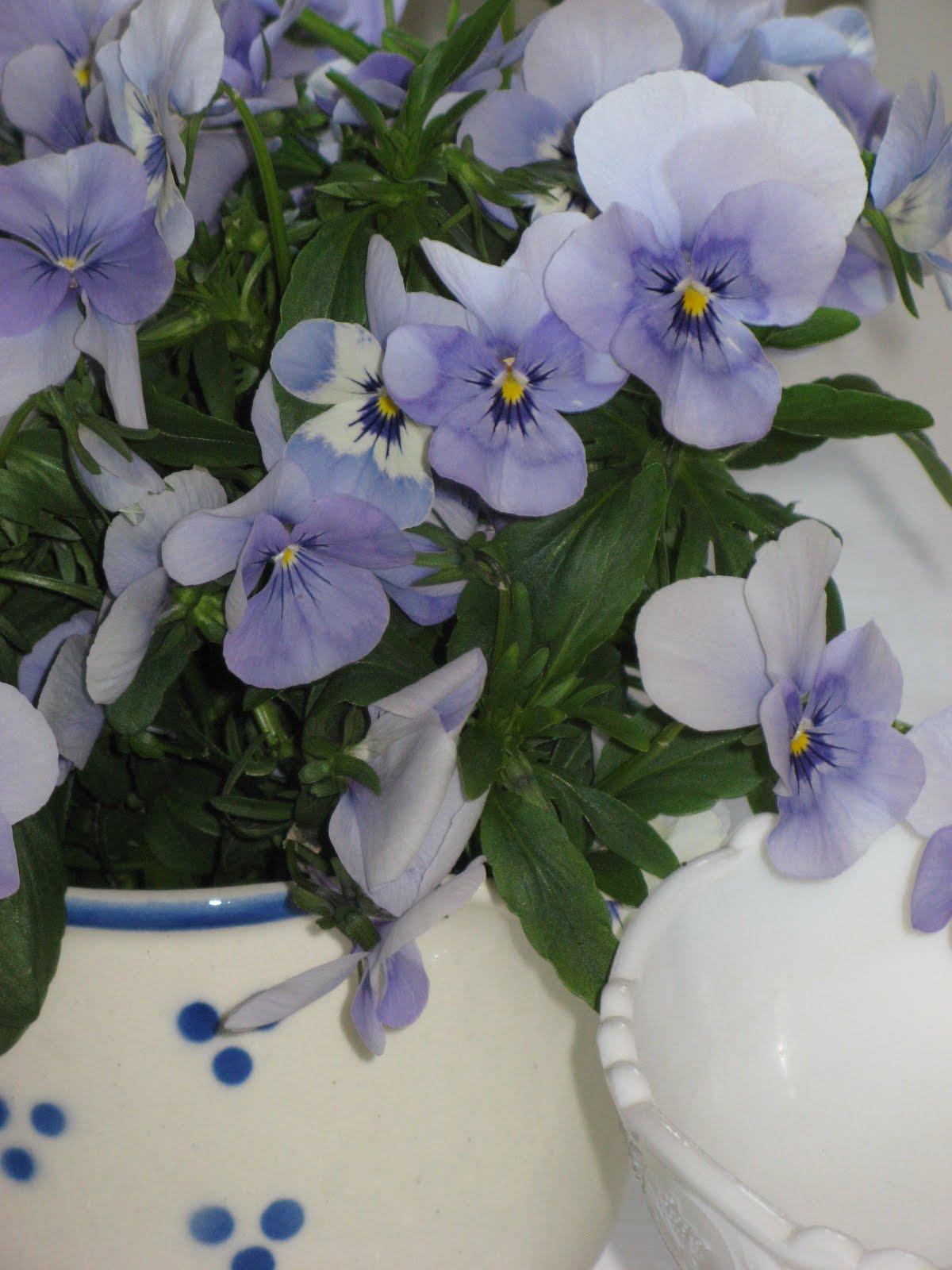 Bestille blomster online dating