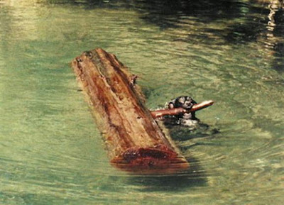 dog swimming with tree trunk