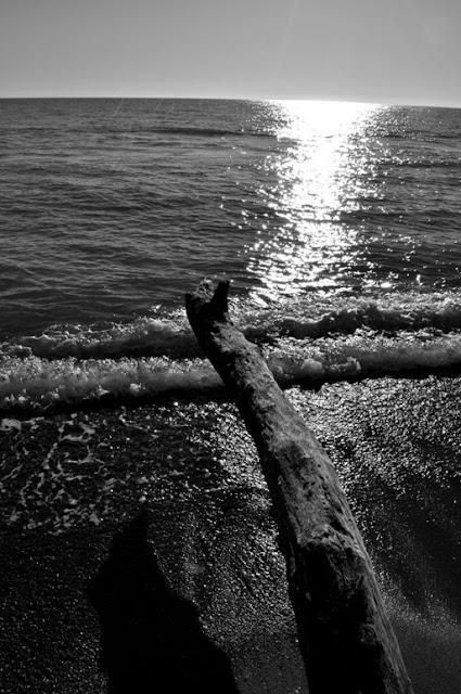 wood+sea
