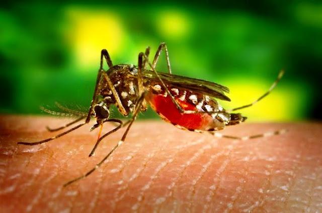 caso- zika- venezuela