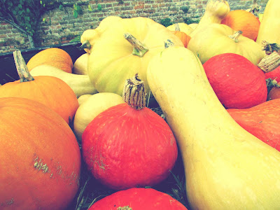 bookandacuppa, book and a cuppa, book & a cuppa, yellow, red, orange, marrows, pumpkins, butternut squash, vegetables, soft focus, photography, Halloween, garden, farmer, countryside, UK, Audley End, Essex, Autumn, Fall, colourful
