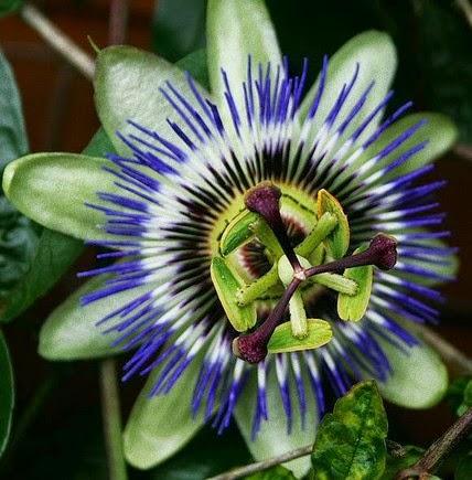 O mundo fantástico das flores