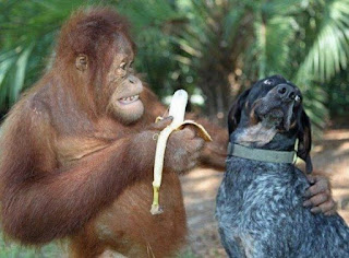 funny picture monkey giving dog a banana