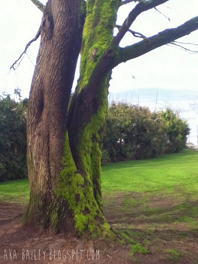 Mossy trees in Vancouver