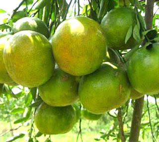 honey orange fruit