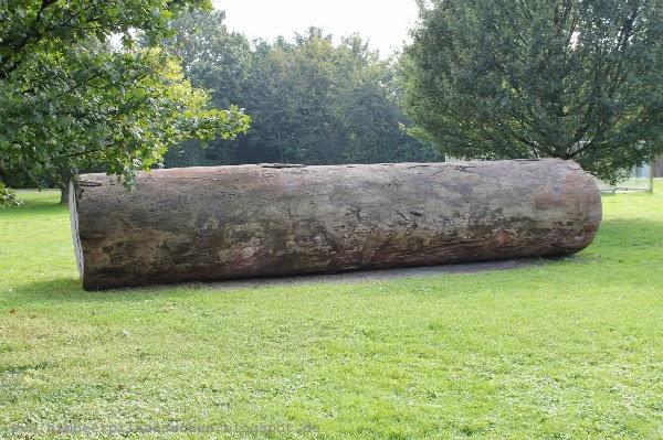 12 von 12 12 v 12 Afrikanischer Baumstamm Skulpturenpark Köln