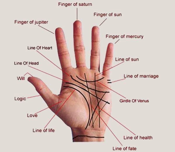 Palmistry Life Line in Hindi