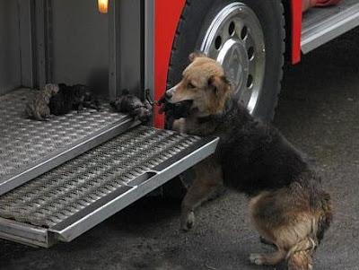 perra salva a sus hijos del incendio
