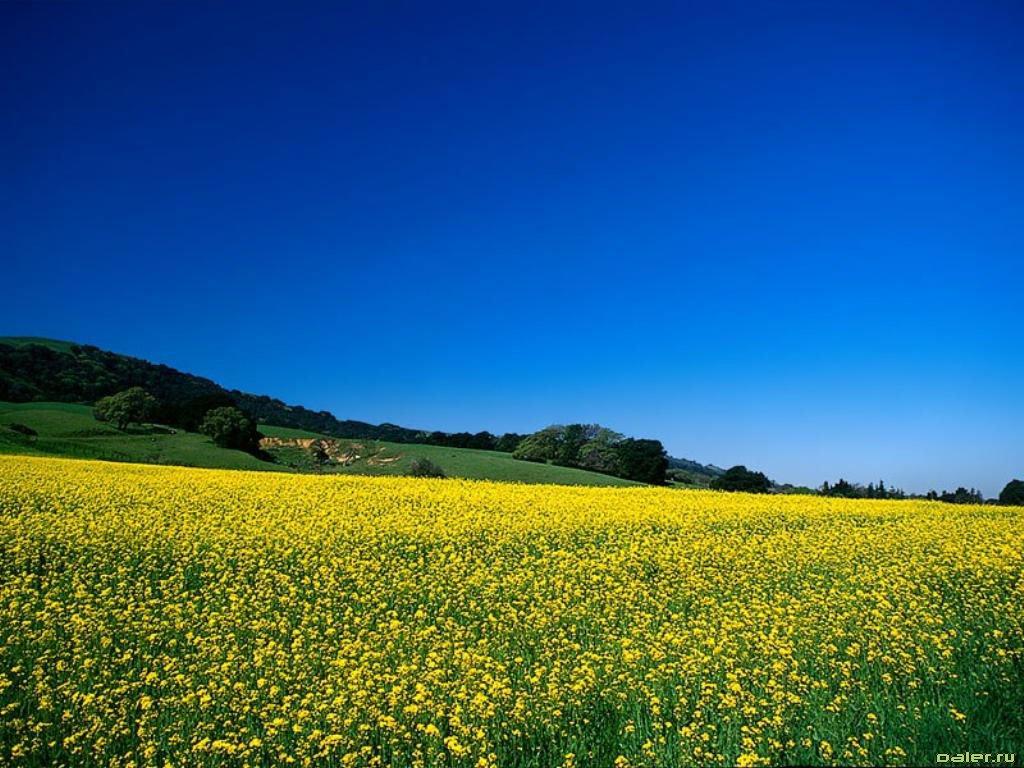 yellow nature wallpaper