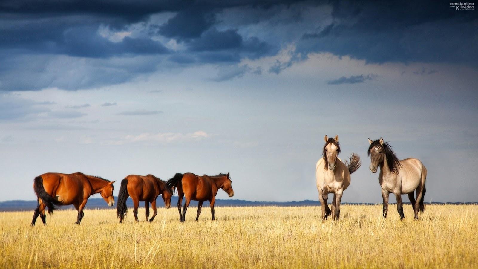 обои лошади 1920