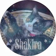 Damens dejlighed, Shakira