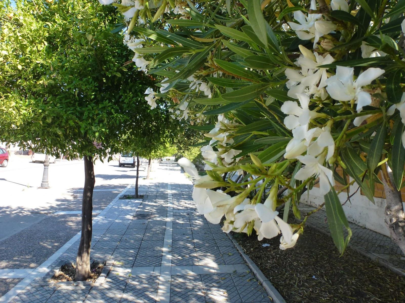Olvera diary los balcones patios y jardines de olvera - Jardines y patios ...