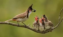 أجمل و أروع صور الطيور