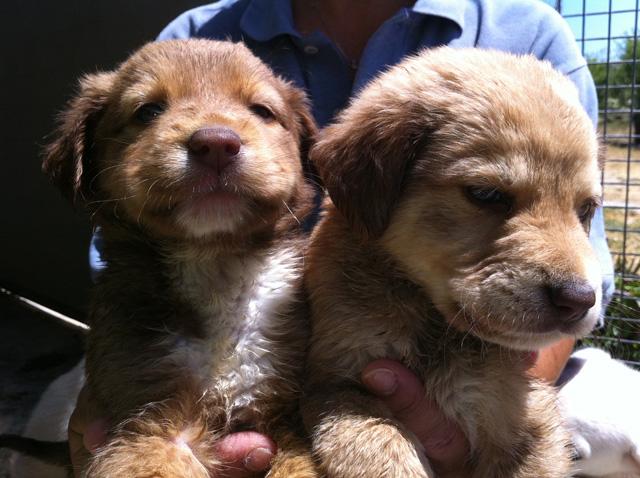 Adotta Un Cane A Siracusa Adottati 4 Cuccioli Taglia Piccola In