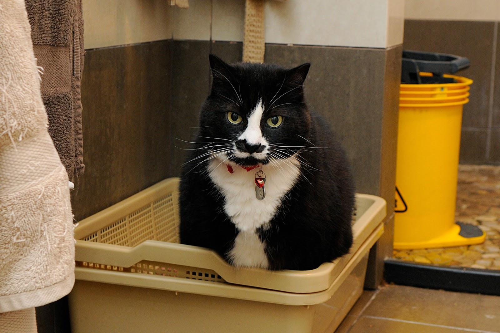 cat litter tray toilet
