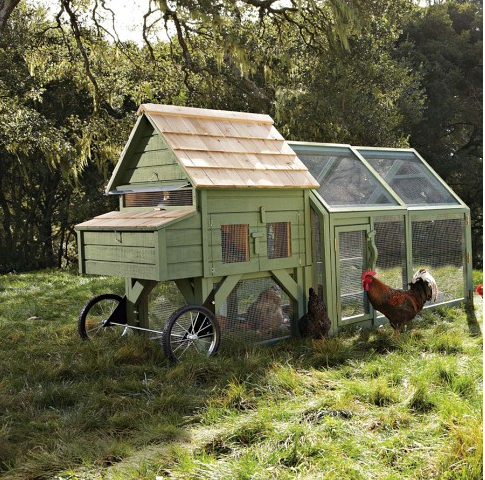 rooster tale designs portable chicken coops