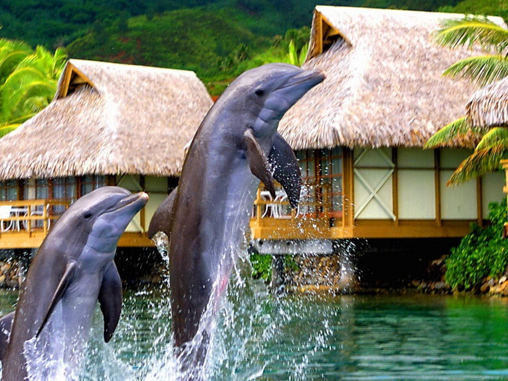"<img src=""http://4.bp.blogspot.com/-HV1jIxL_Uhs/UtpANjGGdDI/AAAAAAAAIxQ/hqUlM2TnCis/s1600/playing-dolphins.jpeg"" alt=""playing dolphins"" />"