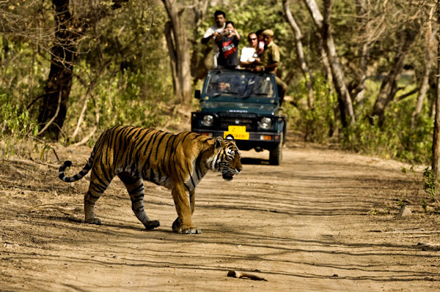 Jeep Safari-Jim Corbett National Park