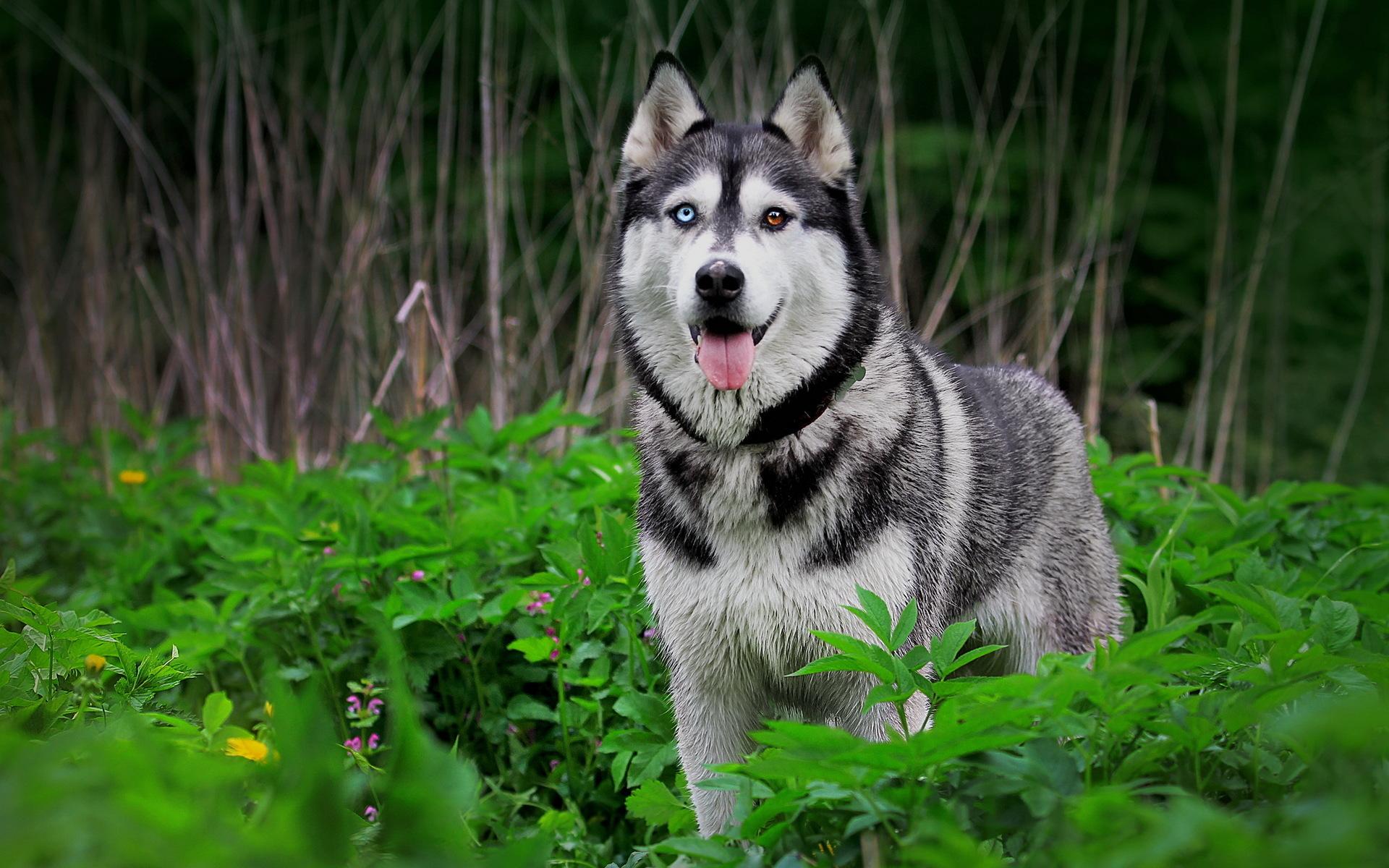 PZ C: imagenes de perros