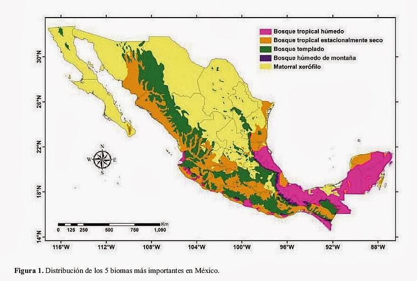 de los grandes tipos de vegetación, o biomas, en México Tomado de