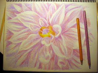 Work in Progress image of a Color Pencil Drawing of a Dahlia Flower