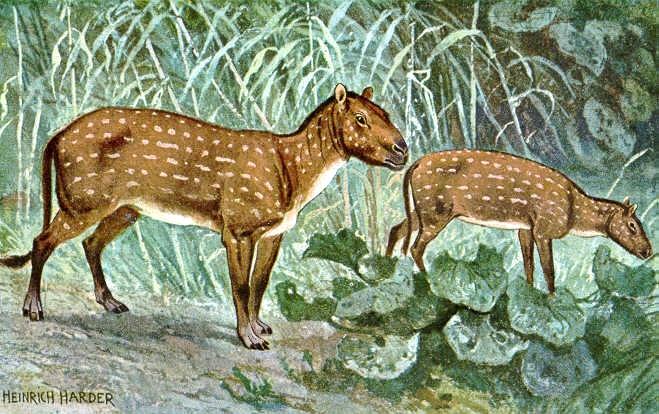 Hyracotherium é o ancestral extinto de cavalos modernos. Ele também é conhecido como o cavalo de madrugada. Hyracotherium viveu cerca de 50 milhões de anos atrás, durante a primeira parte do Período Terciário . Estes animais eram uma vez presente no que hoje são Europa e América do Norte.
