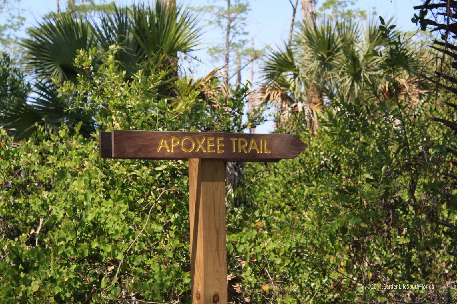 Dawns Garden Life: Trails & Open Spaces III - Apoxee Wilderness Preserve