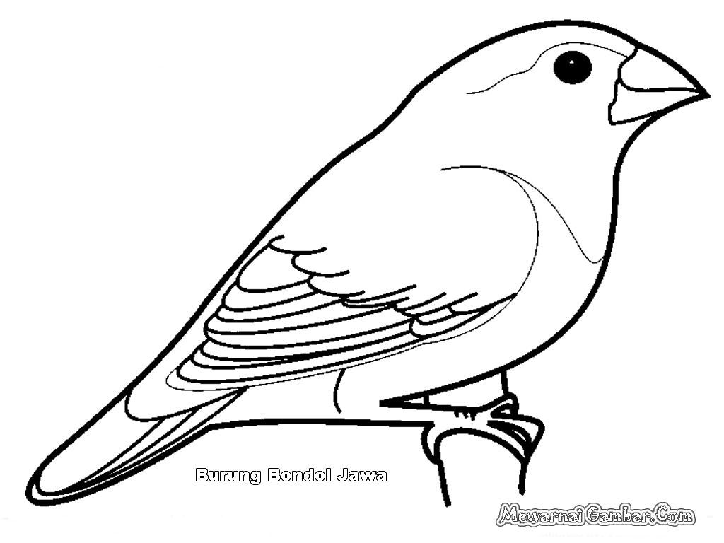 Mewarnai Gambar Burung Bondol | Mewarnai Gambar