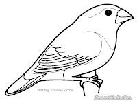 Mewarnai Gambar Burung Bondol Jawa