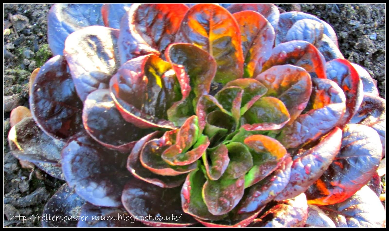 RHS Wisley plants