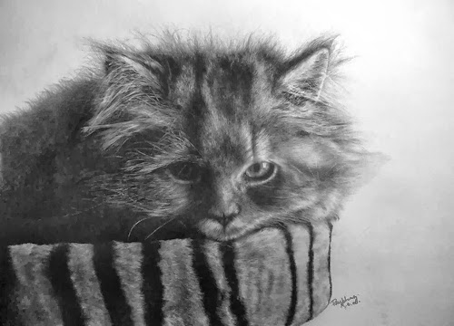 18-Hyper-realistic-Cats-Pencil-Drawings-Hong-Kong-Artist-Paul-Lung-aka-paullung-www-designstack-co