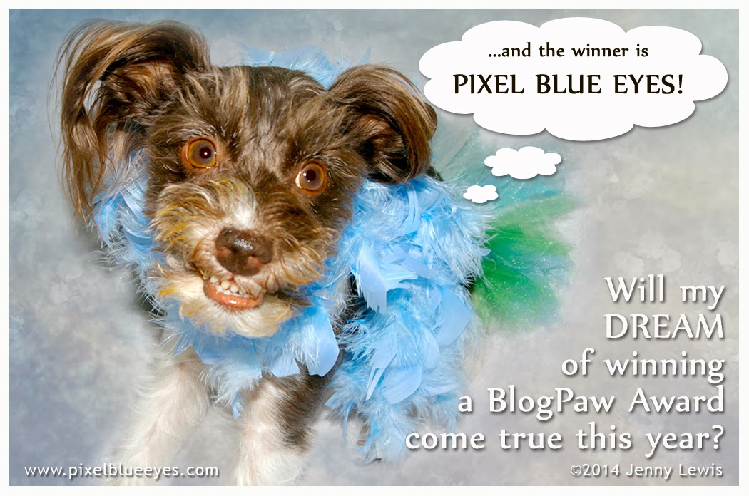 Image of Pixel Blue Eyes dreaming of winning a BlogPaws Nose to Nose Award