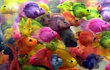 peces..