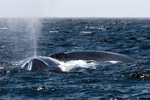 Найдовші водні тварини