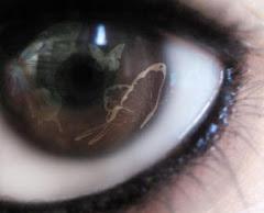 Ojos de Lya