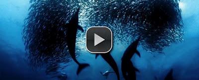 http://4.bp.blogspot.com/-HXH7C7HsCHI/URFNGUw0zvI/AAAAAAAAPzw/27bNC59Japs/s1600/jQuery_Video_Video+-+Kopya.jpg