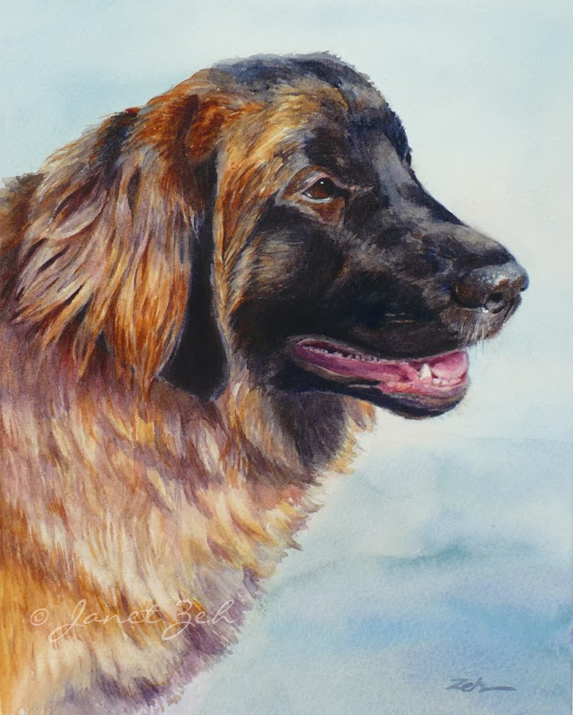 Leonberger Pet Portrait in watercolor
