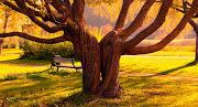 15 Nuevos paisajes del otoño: ¡Maravillas de la naturaleza! twin trees wallpaper