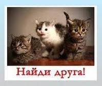 """""""Потеряшка"""" в Челябинске"""